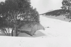 Grey Mare snow 1970 Reet Vallack Collection